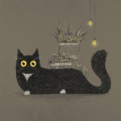 Cozy Evenings: Cat